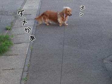 kinako120.jpg
