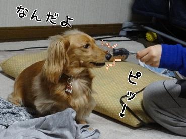kinako125.jpg