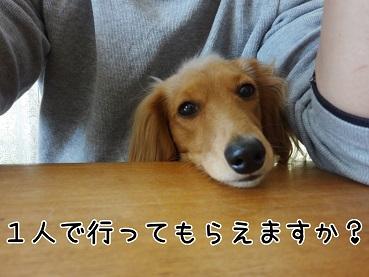 kinako13.jpg