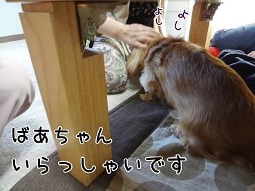 kinako130.jpg