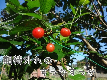 kinako136.jpg