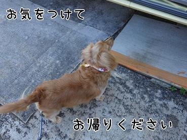 kinako139.jpg