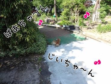 kinako142.jpg