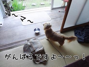kinako143.jpg