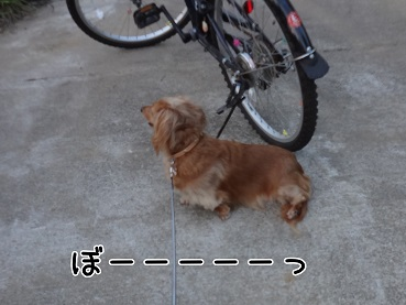 kinako145.jpg