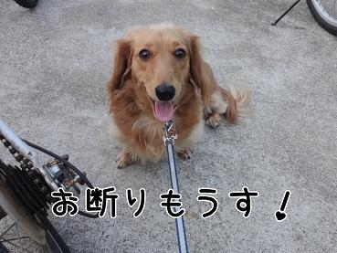 kinako147.jpg