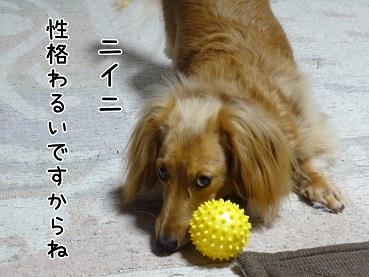 kinako15.jpg