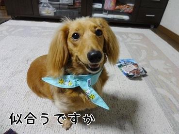 kinako164.jpg