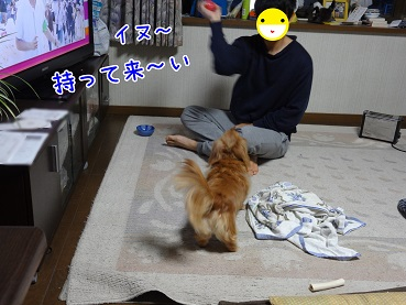 kinako17.jpg