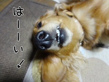 kinako172.jpg