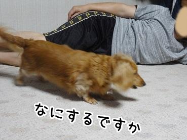 kinako181.jpg