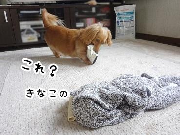 kinako188.jpg