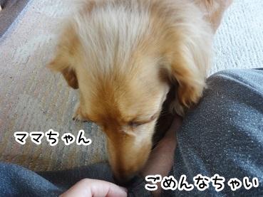 kinako194.jpg