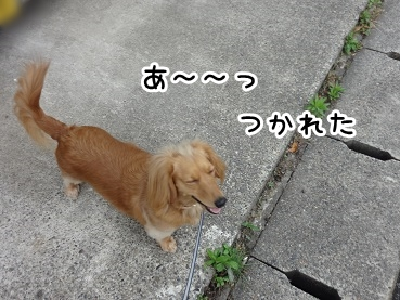 kinako202.jpg