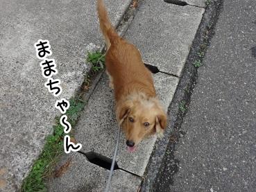 kinako203.jpg