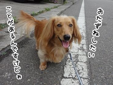 kinako204.jpg