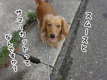 kinako205.jpg