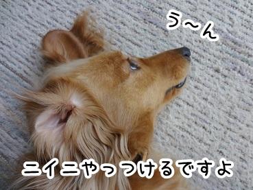 kinako216.jpg