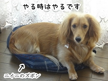 kinako218.jpg