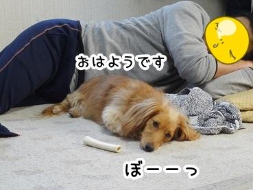 kinako220.jpg