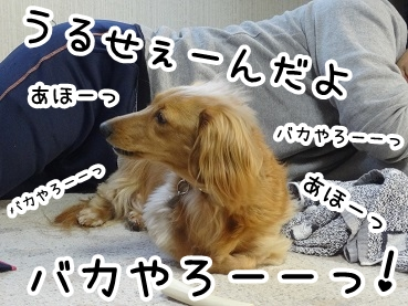 kinako222.jpg