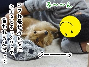 kinako229.jpg