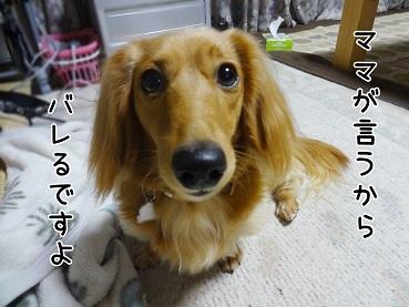 kinako24.jpg