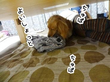 kinako243.jpg