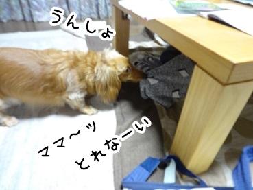 kinako250.jpg