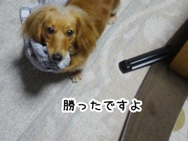 kinako254.jpg