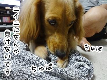 kinako255.jpg