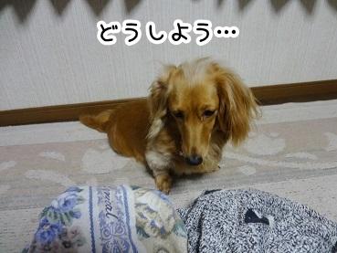 kinako257.jpg
