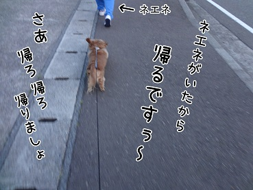 kinako26.jpg