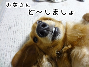 kinako261.jpg