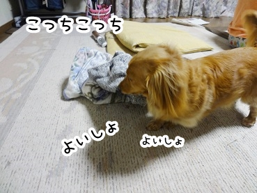 kinako263.jpg