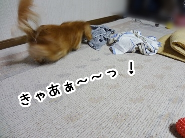 kinako264.jpg