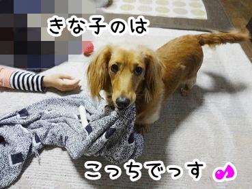 kinako265.jpg