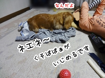 kinako268.jpg