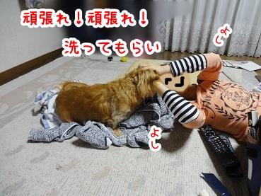 kinako269.jpg