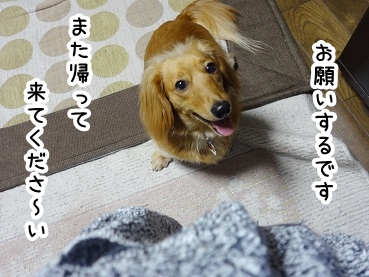 kinako271.jpg