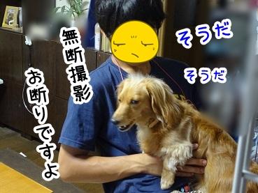 kinako276.jpg