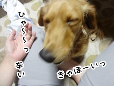 kinako284.jpg
