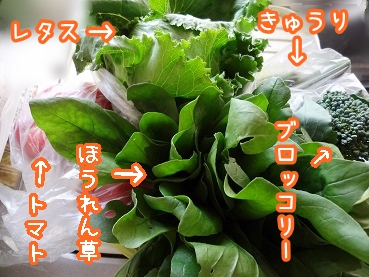 kinako297.jpg