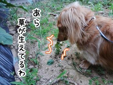 kinako298.jpg