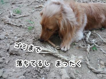 kinako300.jpg