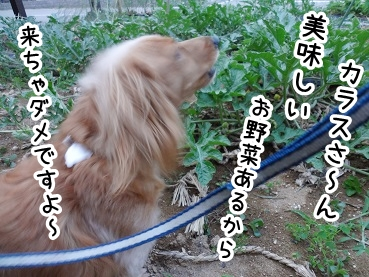 kinako302.jpg
