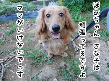 kinako304.jpg