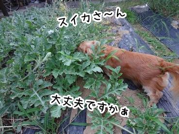 kinako305.jpg