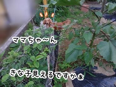 kinako307.jpg