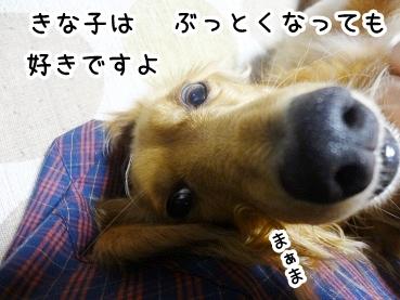 kinako313.jpg